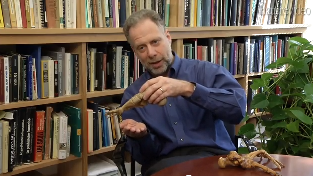 The BareFoot Professor Daniel Lieberman